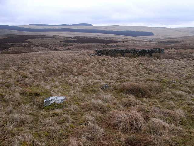 Sheepfold on Emblehope Moor