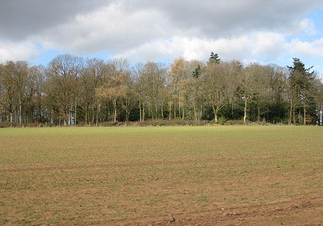 Unnamed wood near Brockhampton
