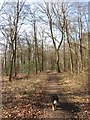 SP8807 : The Path beside Boddington Banks by Chris Reynolds
