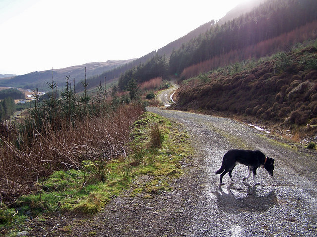 Forestry road, Glen Brittle