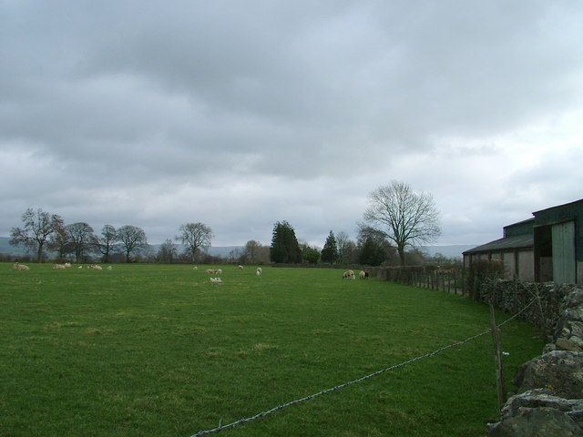 Field with early lambs at Soulby