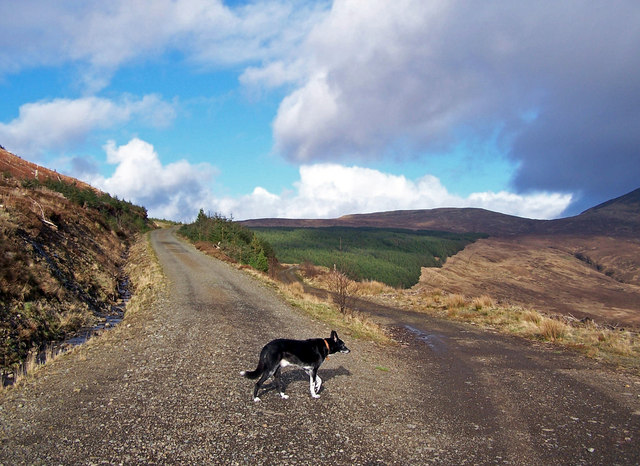 Forestry roads, Glen Brittle