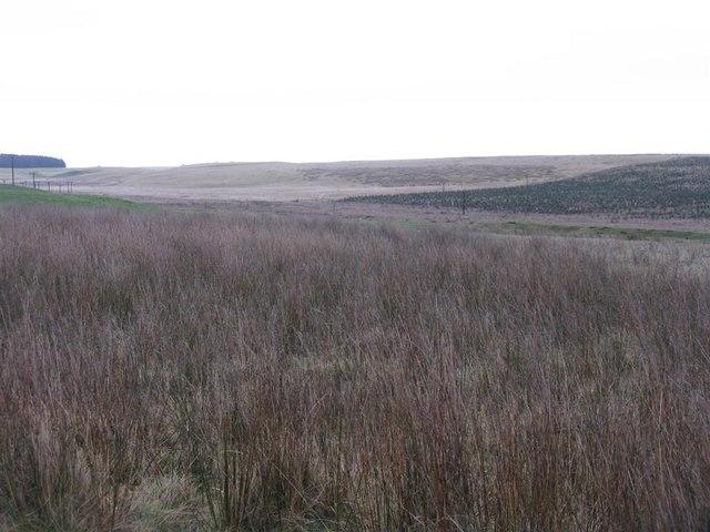 New plantation at Craigburn