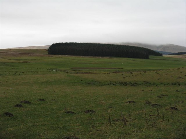 Rough pasture and plantation near Leadburn