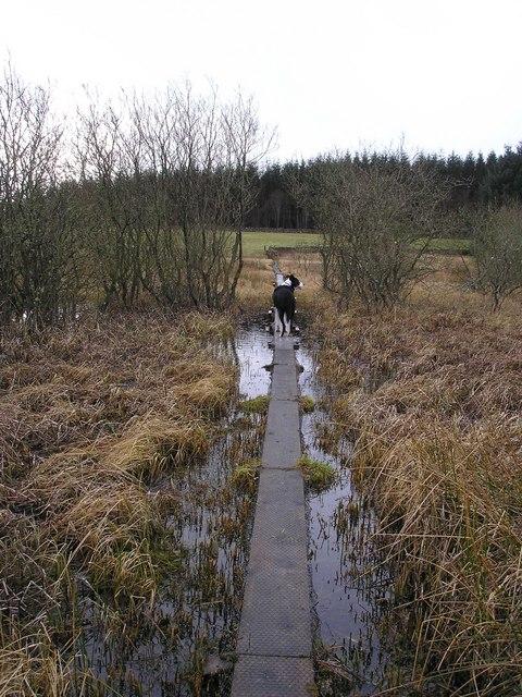 Walkway over Nether Whitlaw Moss