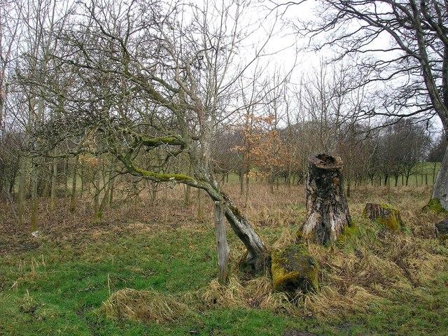 Leaning bush on the west end of Lindean Reservoir