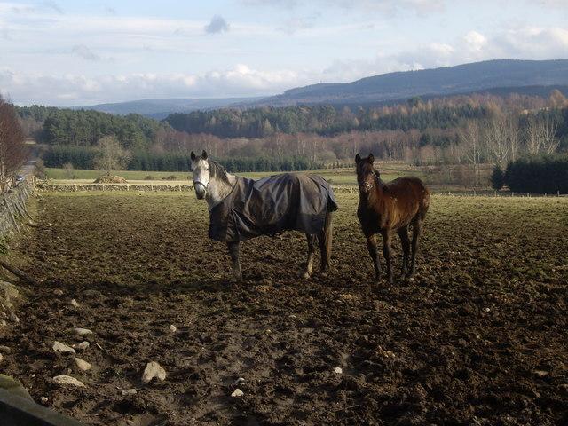 Horses by Craiglash Cottage