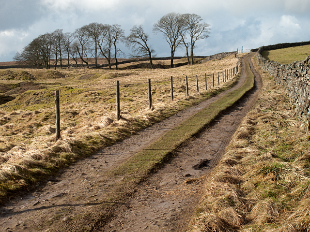 Bridleway at Yarnbury