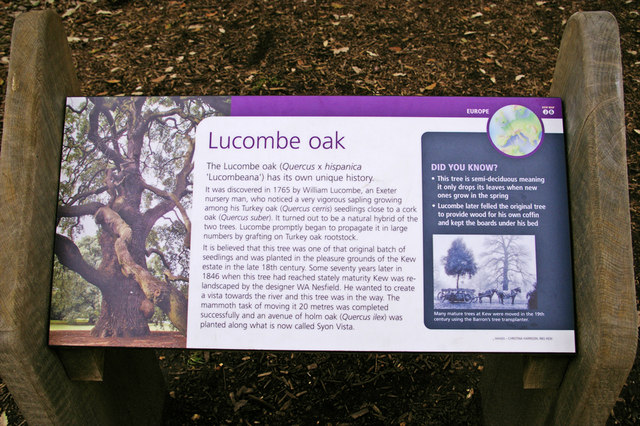Plaque re Lucombe Oak, Kew Gardens, Surrey