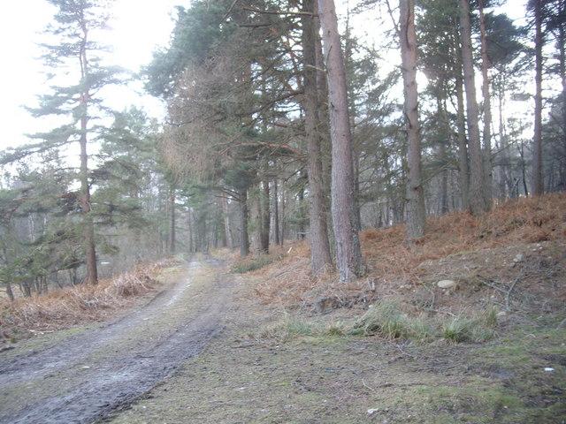 Track southwards from Sluie Loch