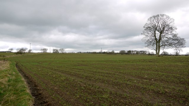 Arable field east of Corneyside