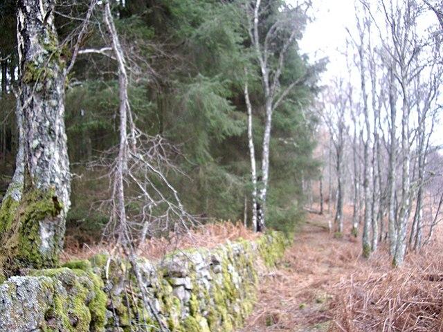 A boundary wall in Sluie Woods