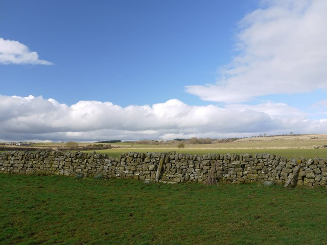 Dry stone wall north of Ingoe Mill