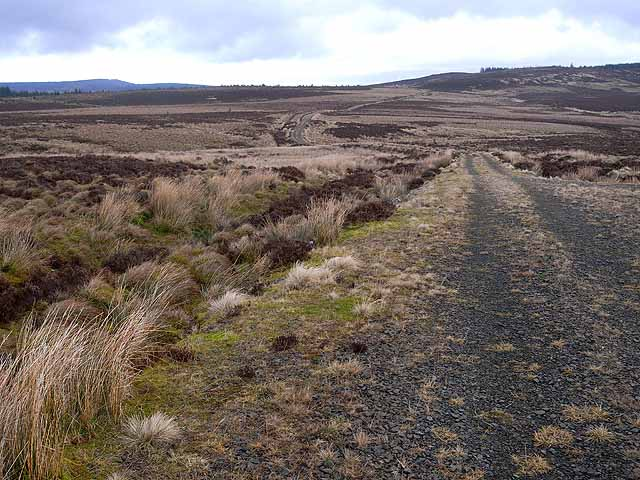 Military track on Emblehope Moor