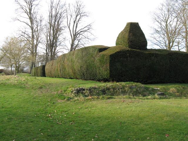 Topiary hedge beside footpath