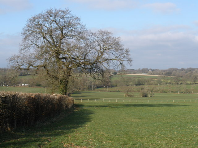 Looking towards Churchstanton Hill