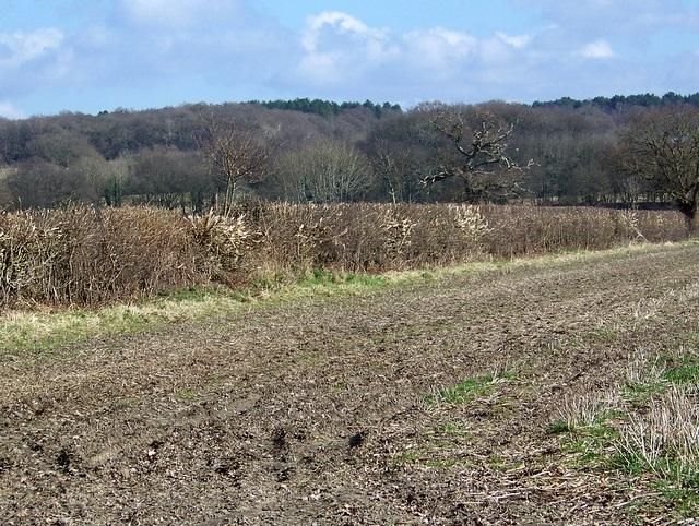 Field boundary near Crow