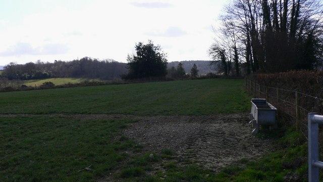 Field  by Eastshaw Lane at Woolbeding