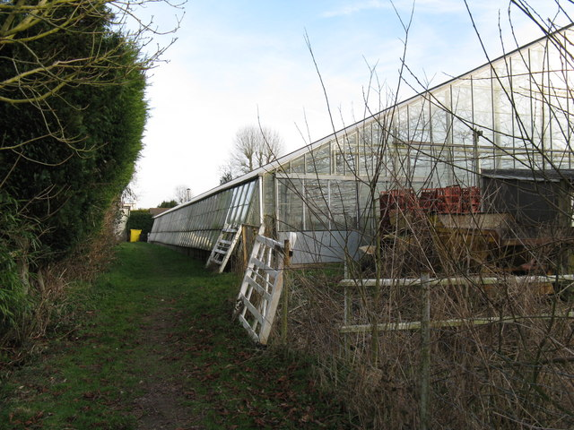 Greenhouse at Whale's Farm