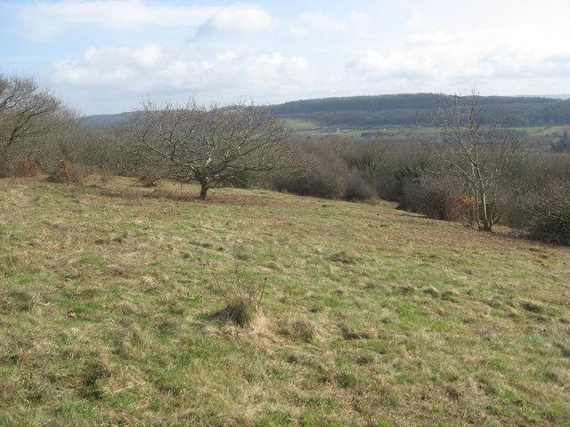 Limestone Upland on Walton Common
