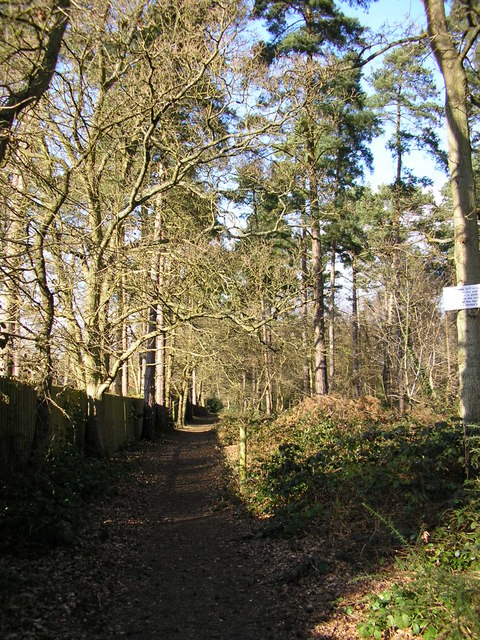 Footpath by woodland