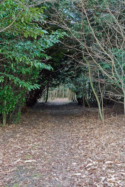 Footpath near Longwood House