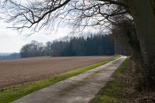 Road on Longwood Estate