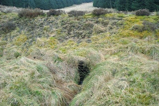 Culvert under forest track