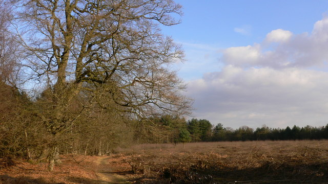Area recently coppiced in Goldrings Warren