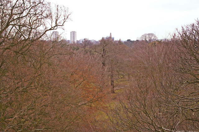View from the Xstrata Treetop Walkway and Rhizotron, Kew Gardens, Surrey