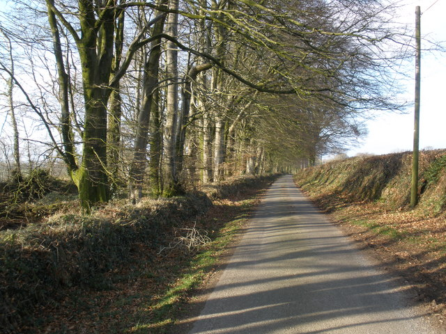 Avenue of Beech trees, north of Otterford