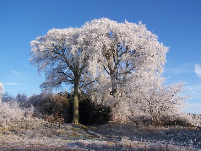 Hoarfrost at Mellendean