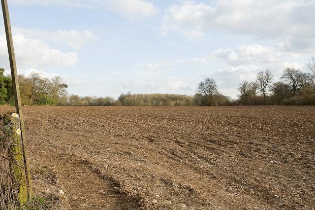 Footpath into Shortlands Copse, Longwood
