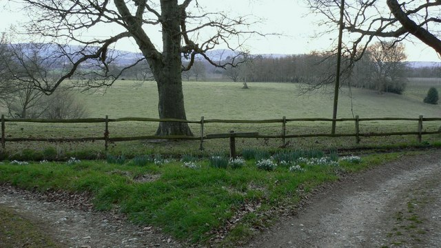 Bridleway junction near Holm Wood