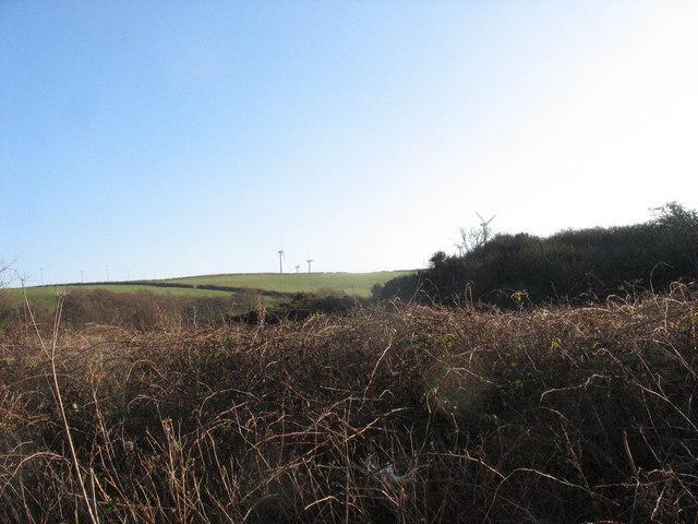 Area of marshland near Afon Wygyr