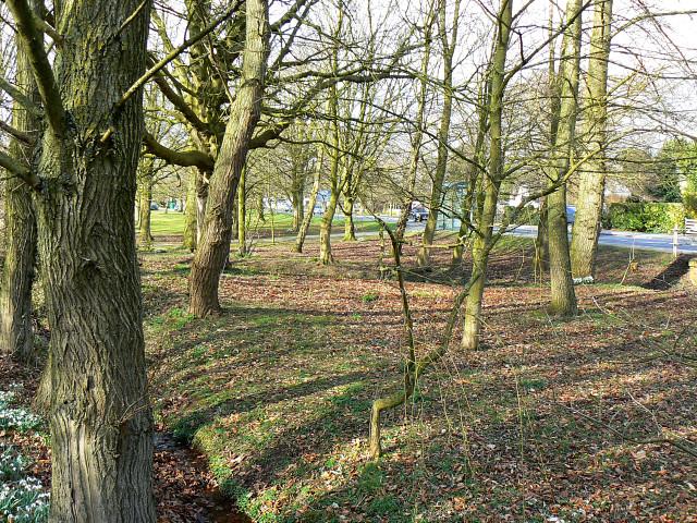 Woodland, A3102, Lyneham