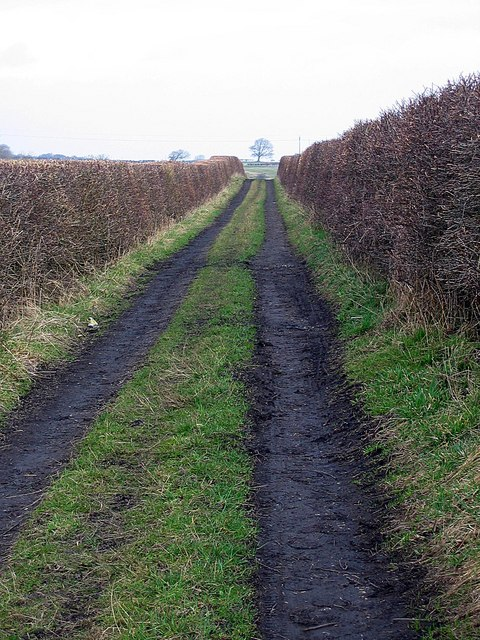 Bridleway towards White Hurworth farm