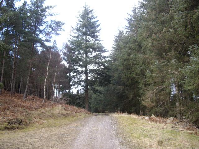 Track to Craiglash