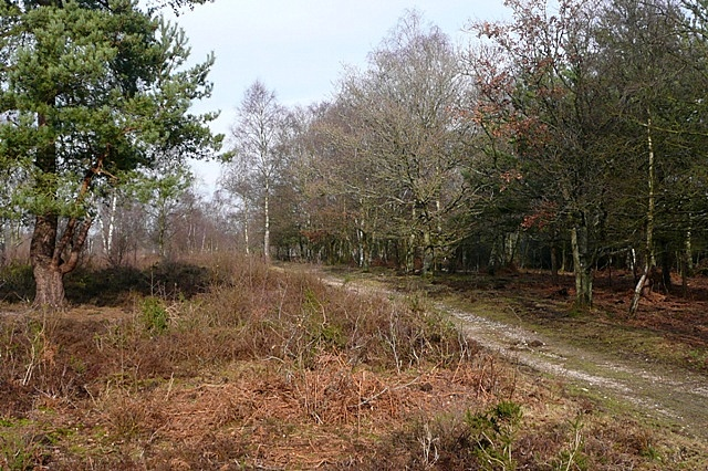 Sandleford Woods