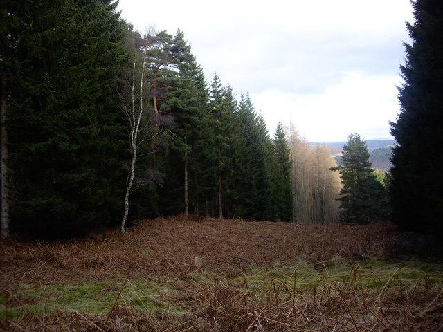 Firebreak in forest