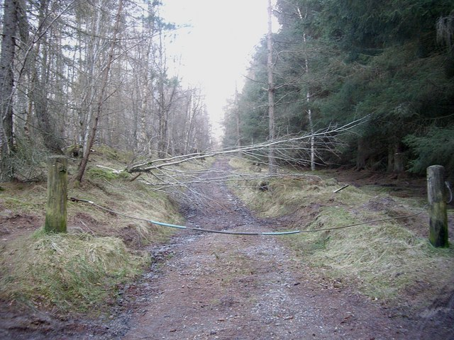 Access to forest track