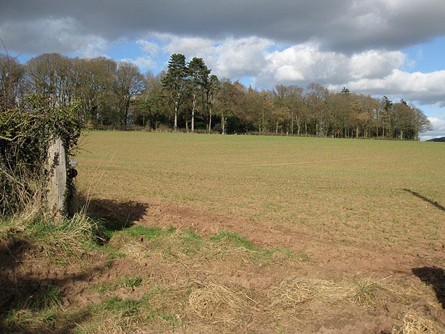 Small wood near Maythorn Farm