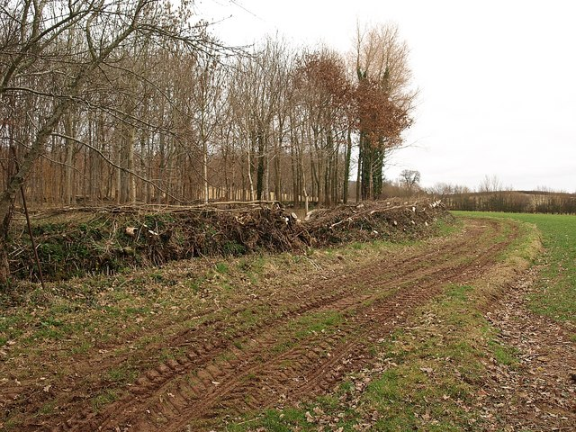 Woodland edge, Shopnoller