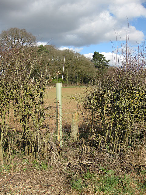 Tree planting, Brockhampton