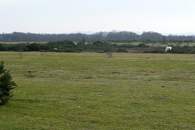 Greenham and Crookham Commons
