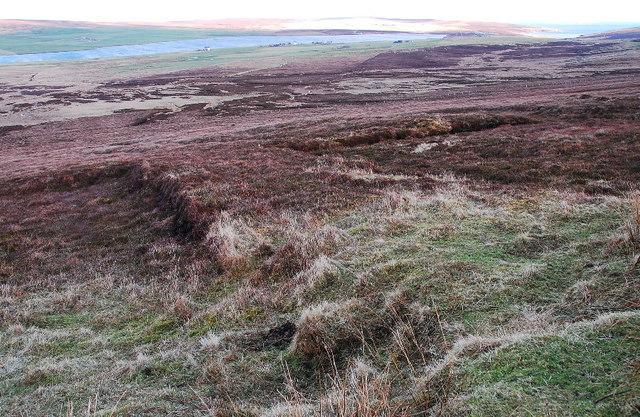 Abandoned peat cuttings