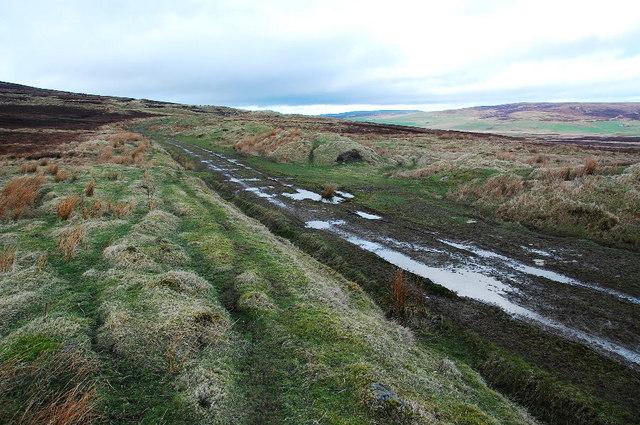 Track on Burgir