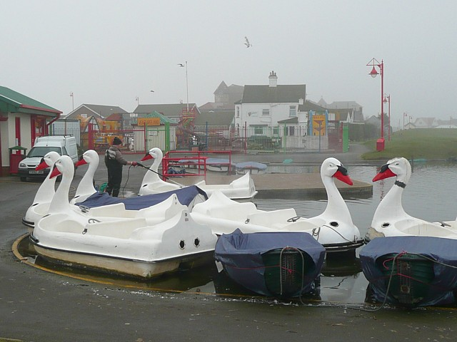 Swans on the boating lake, Queen's Park, Mablethorpe