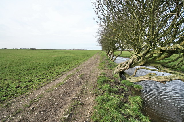 Bridleway, Drain and Old Hedge