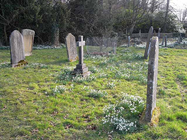 Snowdrops amongst the gravestones
